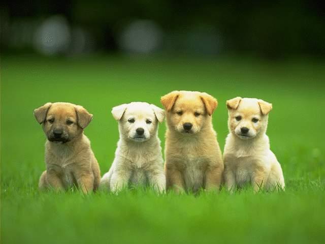 CutePuppies